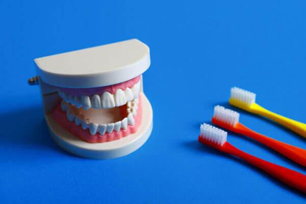「虫歯」「歯周病」「歯並び」を考えた3つの予防。